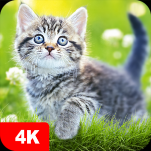 Cat Wallpapers & Cute Kittens Icon
